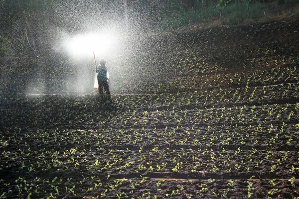 dobre nawozy dla rolników
