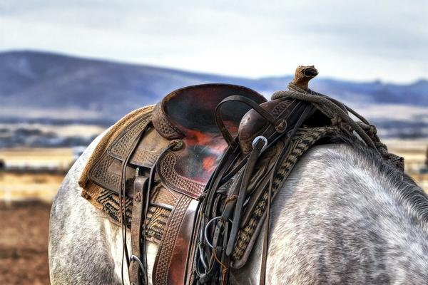 sklep jeździecki